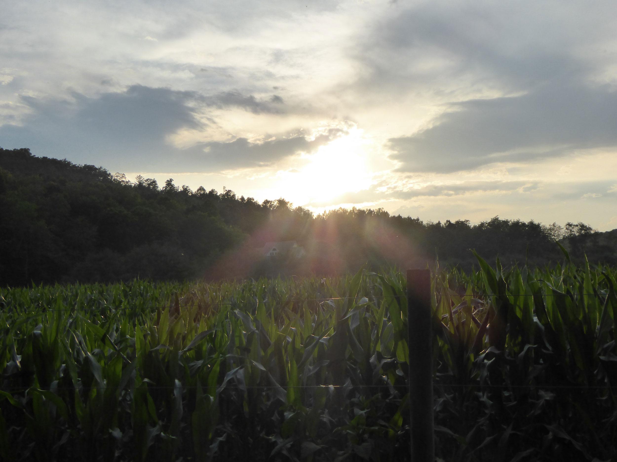 Schumak-Farm-2