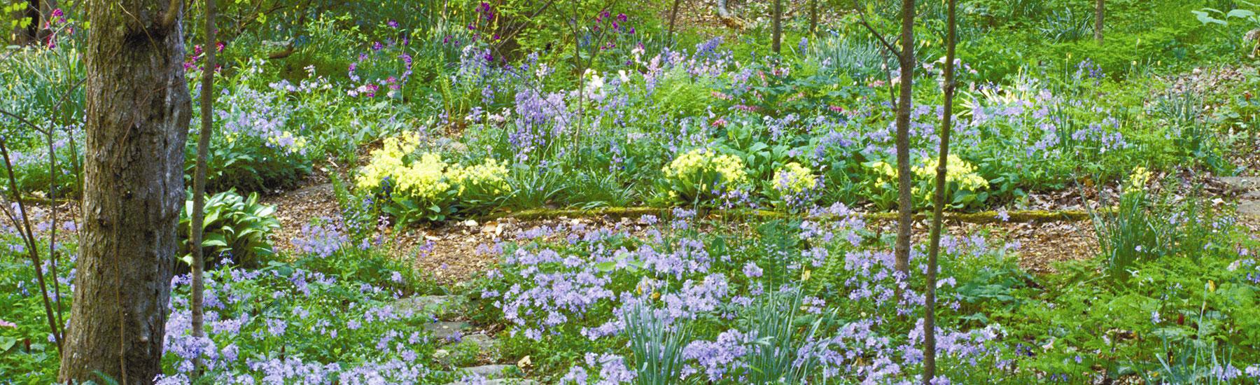 emilys-wildflower-garden-volunteer