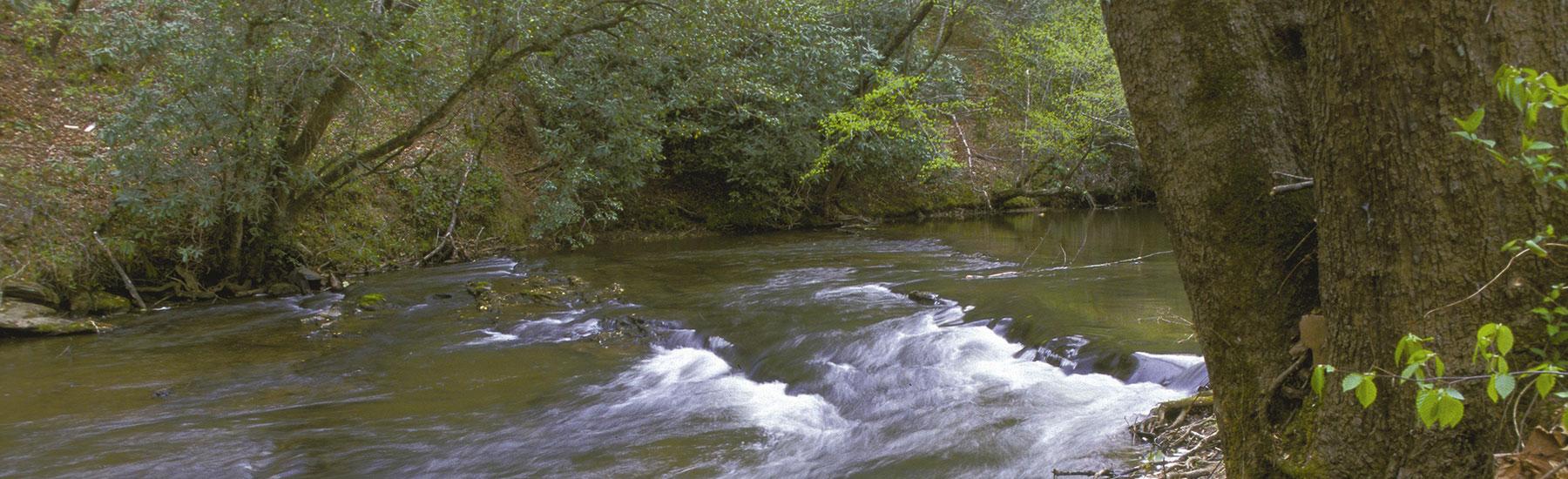 ola-hendren-mitchell-piedmont-land-conservancy