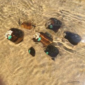 KR - mussels