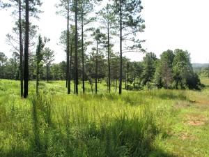 Wolf Island Prairie Planting Day @ Wolf Island Prairie | Reidsville | North Carolina | United States